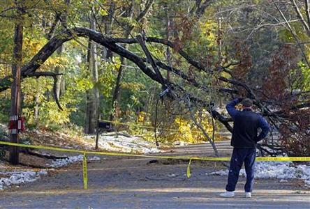 A man looks at fallen tree that is seen hanging on electrical wires, two days after an early snowfall in Weston, Massachusetts October 31, 2011.  REUTERS/Adam Hunger