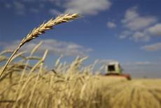Комбаин собирает урожай на поле под Астаной, 11 октября 2011 года. Цены на рынках сельскохозяйственной продукции останутся высокими и волатильными, несмотря на увеличение предложения и снижения спроса, сообщила в четверг Продовольственная и сельскохозяйственная организация Объединенных наций, повысив прогноз мирового производства зерна в этом году до рекордных 2,3 миллиарда тонн.  REUTERS/Shamil Zhumatov