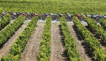 The pack of riders cycle through the vineyards during  the 16th stage of the Tour de France 2011 cycling race from Saint-Paul Trois Chateaux to Gap July 19, 2011.  REUTERS/Pascal Rossignol