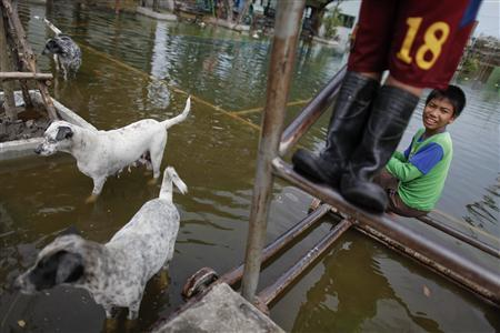 Boys and dogs stand at a sport court at a newly flooded neighborhood in Bangkok November 13, 2011. REUTERS/Damir Sagolj