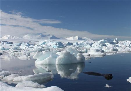 A seal swims by icebergs off the British Antarctic Survey's Rothera base January 23, 2009.   REUTERS/Alister Doyle