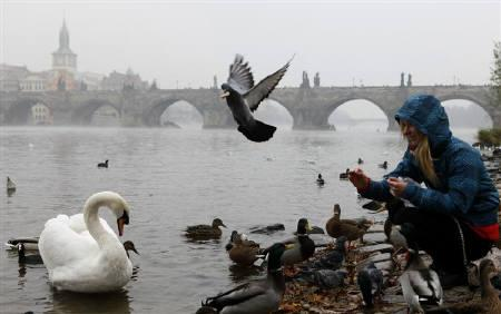 A girl feeds birds near the medieval Charles Bridge in central Prague November 15, 2011, as a large part of the Czech Republic was covered in a dense smog.  REUTERS/Petr Josek/Files