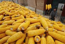 A farmer stores corn in a container, to sell them in a market in China, October 21, 2008. REUTERS/Stringer