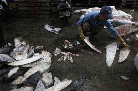 A worker examines shark fins cut off from the frozen carcasses of sharks at a fish processing plant in Kaohsiung, southern Taiwan, November 15, 2011. REUTERS/Pichi Chuang