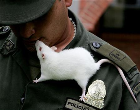 Runcho sniffs the mouth of a police animal trainer at a police school in Sibate, Colombia, May 3, 2006. REUTERS/Daniel Munoz