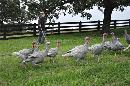 P. Allen Smith rounds up his flock of blue state turkeys at his 650-acre Moss Mountain Farm outside Little Rock, Arkansas, in this 2009 handout image obtained by Reuters on November 23, 2011.  REUTERS/Courtesy Heritage Poultry Conservancy/Handout