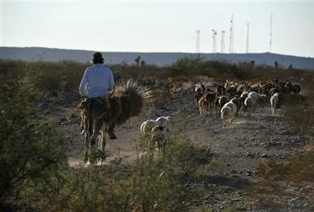 A farmer herds his goats in San Jose de la Paila in the state of Coahuila November 24, 2011.  REUTERS/Stringer