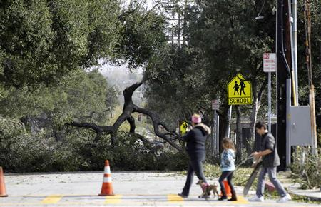 A portion of a broken tree is pictured following a wind storm in Pasadena, California, December 1, 2011.  REUTERS/Mario Anzuoni