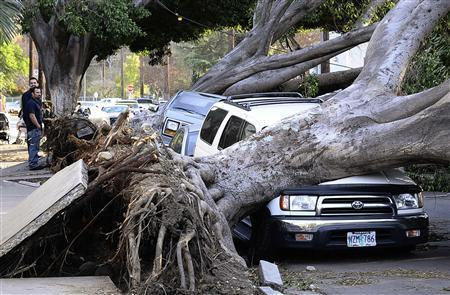 Local residents look at eucalyptus trees which fell on cars and blocked the street on Ave 57 after a heavy wind storm in the morning at Highland Park in Los Angeles, California December 1, 2011. REUTERS/Gene Blevins