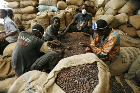 Men grade cocoa beans in a warehouse  Ivory Coast, September 22, 2008. REUTERS/Luc Gnago