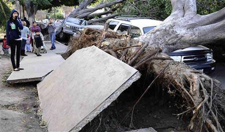 Residents look at slabs of the broken concrete pavement and uprooted eucalyptus trees after a heavy wind storm in the morning at Highland Park in Los Angeles, California December 1, 2011. Offshore winds gusting as high as near 100 miles per hour left much of the Los Angeles area strewn with toppled trees and downed power lines on Thursday, slowing rush-hour traffic and knocking out electricity to over 300,000 customers. REUTERS/Gene Blevins