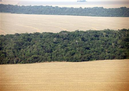An aerial view of soy plantations flanking the Amazon forest in Mato Grosso September 8, 2011. Mato Grosso is the biggest grains-producing state in Brazil.  REUTERS/Paulo Whitaker
