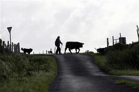 Farmer Bernie Winter drives his cattle to the low field for grazing on  Clare Island, County Mayo, Ireland September 23, 2009.   REUTERS/Cathal McNaughton