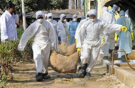 Health workers carry culled poultry for disposal at Gandhigram village, about 35 km (22 miles) west of Agartala, capital of India's northeastern state of Tripura, March 7, 2011. REUTERS/Stringer