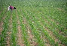A worker tends a corn plantation on the outskirts of Beijing June 17, 2005. REUTERS/Jason Lee