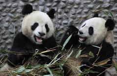 <p>Giant Pandas Yuan Zai (L) and Huan Huan eat bamboo branches at Chengdu Research Base of Giant Panda breeding in Chengdu, Sichuan province January 9, 2012. The two giant pandas will be loaned to ZooParc de Beauval in France on January 15, 2012. Picture taken January 9, 2012. REUTERS/China Daily</p>