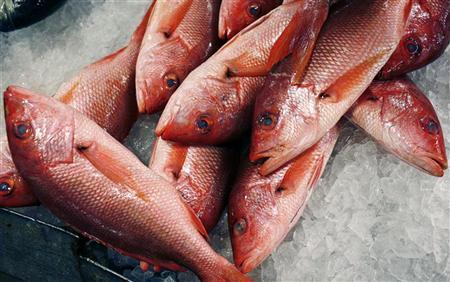 Red snappers lay on ice for sale at JMS Seafood, a fish wholesaler in the New Fulton Fish Market in the Bronx section of New York City June 21, 2010. REUTERS/Mike Segar