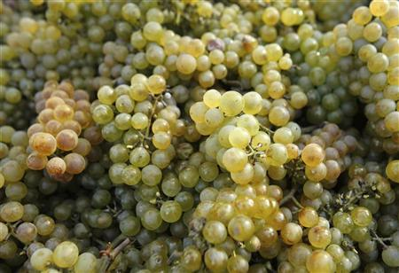 Chardonnay grapes are seen on a cart in a vineyard during a harvest in Klosterneuburg, the neighbouring city north of Vienna October 11, 2009. REUTERS/Heinz-Peter Bader