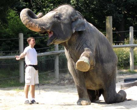 Shanthi, a female Asian elephant weighing about 9,000 pounds (4,082 kg) follows caretaker Sean's directions during an elephant training demonstration at the Smithsonian National Zoo in Washington, September 6, 2007. REUTERS/Hyungwon Kang