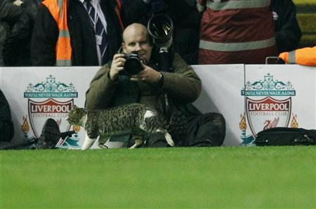 A cat walks on the pitch during the English Premier League soccer match between Liverpool and Tottenham Hotspur at Anfield in Liverpool, northern England February 6, 2012. REUTERS/Phil Noble