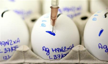 A scientist checks eggs for bird flu at the Zooprophylactic Institute near the northern Italian city of Padua December 12, 2005. REUTERS/Daniele La Monaca