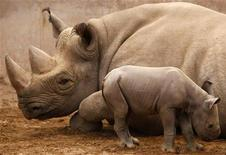 A newly born baby Eastern Black Rhinoceros calf stands with her mother in their enclosure at Chester Zoo in England, May 18, 2009.  REUTERS/Phil Noble