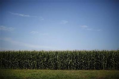 Scientists warn EPA on Monsanto corn rootworm
