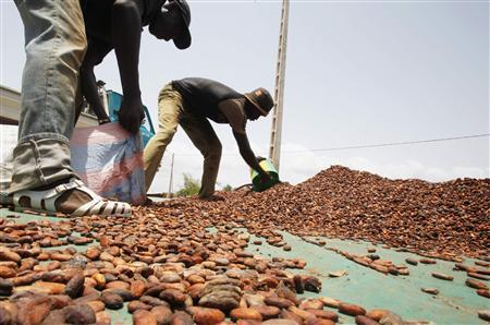 Workers scoop up cocoa beans to put into sacks in San Pedro March 9, 2012. REUTERS/Thierry Gouegnon