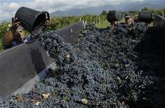 A worker loads a trailer with grapes for wine during harvest at a vineyard in the village of Sabue in Kakheti region of Georgia about 130 km (80 miles) west of Tbilisi, September 14, 2011. REUTERS/David Mdzinarishvili