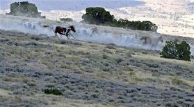 Wild horses run down a ridge n the Conger Mountains near Border in Utah, September 8, 2010. REUTERS/Jim Urquhart