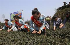 Работники собирают чайные листья, удобренные пометом панд, на чайной ферме в Яане, 19 марта 2012 г. Национальное достояние Китая - большие панды - может стать еще ценнее, если одному местному бизнесмену удастся использовать их помет для выращивания зеленого чая, который он собирается продавать по $200 за чашку. REUTERS/Stringer China