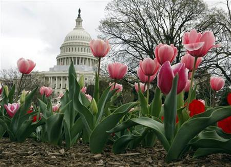 Tulips are seen in bloom on the first official day of Spring on Capitol Hill in Washington, March 20, 2012. REUTERS/Larry Downing