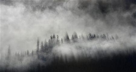 Clouds move through trees along a mountain ridge in Whistler, British Columbia February 1, 2012. REUTERS/Andy Clark