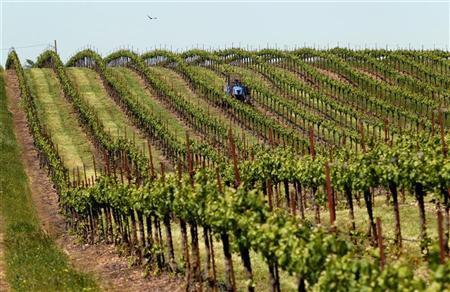 Grass growing between rows of Merlot grapes is mowed at a vineyard near Galt, California April 30, 2010. REUTERS/Robert Galbraith