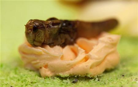 A caramelized locust is used to decorate a cake made of insects at the University of Wageningen April 17, 2012. REUTERS/Michael Kooren