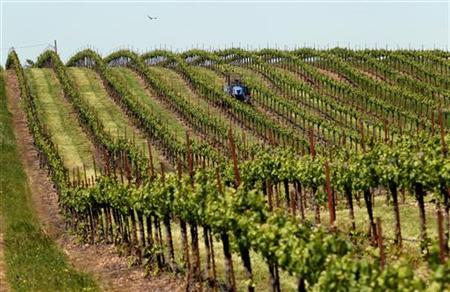 Grass growing between rows of Merlot grapes is mowed at a vineyard near Galt, California April 30, 2010. REUTERS/Robert Galbraith
