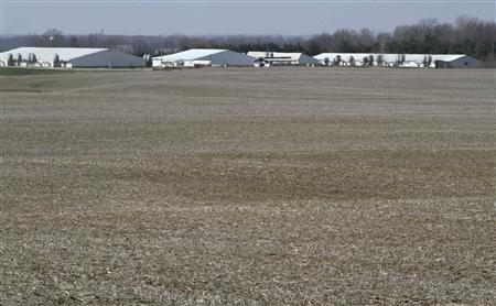 A general view shows a unit of Whiteshire Hamroc farm in Albion, Indiana March 16, 2012. REUTERS/John Gress