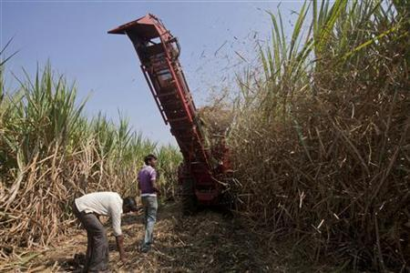 Villagers watch a mechanical harvester at work in a sugarcane field near the village of Umraj, about 285km (177 miles) south of Mumbai, December 5, 2011. REUTERS/Vivek Prakash