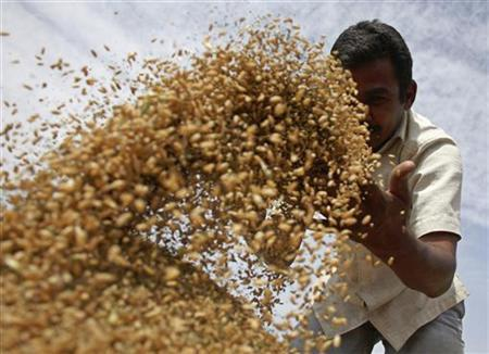 A labourer sifts wheat crop in a field on the outskirts of Ahmedabad March 5, 2010. REUTERS/Amit Dave/Files