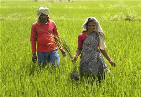 Tribal villager, Kowasalya Thati (R), 35, tends to her rice paddy crop with her husband in Khammam district in Andhra Pradesh March 20, 2012. REUTERS/AlertNet/Nita Bhalla/Files