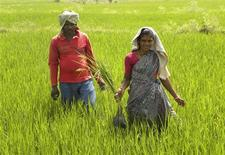 "Tribal villager, Kowasalya Thati (R), 35, tends to her rice paddy crop with her husband in Khammam district, India's southern state of Andhra Pradesh March 20, 2012. Kowasalya's family is one of hundreds of thousands who belong to India's 700 listed tribes who are at last gaining legal titles to the land they have lived on for generations, thanks to a legal aid scheme run by the Andhra Pradesh government with international advocacy group Landesa. In the scheme, which is likely to be rolled out nationally, young people often armed with only a secondary-level education are drawn from mud-and-brick villages and trained as paralegals, then sent out to help people to understand their rights and secure title, or ""patta"", to their land. Picture taken March 20, 2012. To match Feature HUNGER-INDIA/ REUTERS/AlertNet/Nita Bhalla/Files"