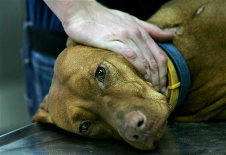 A dog is comforted during a medical examination at the Beit Dagan Animal Science Institute near Rishon Letzion February 15, 2006. REUTERS/Ronen Zvulun