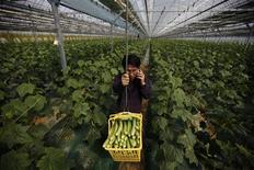 Suh Jeong-deok, a former head researcher for Hanwha Chemical Corp, works at his cucumber farm in Sangju, about 270 km (168 miles) southeast of Seoul, April 4, 2012. A growing number of South Koreans are moving back to the countryside. According to government statistics, 10,503 families left Korean cities in 2011 to take up farming, more than double the number in 2010. REUTERS/Kim Hong-Ji