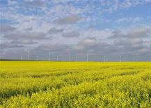 A canola crop used for making cooking oil sits in full bloom on the Canadian prairies with windmills in the background near Fort Macleod, Alberta, July 11, 2011. REUTERS/Todd Korol