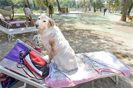 A dog sits on a sun chair at a beach for dogs on the Tiber river in Rome August 19, 2009. REUTERS/Chris Helgren