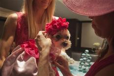Wendy Diamond, owner of Lucky, a Maltese dog, adjusts Lucky's hat before her bridal shower in New York, May 14, 2012. Like many brides, she's in a rush to walk down the aisle but this was not your typical bridal shower. The bride, Lucky, like 12 of the 32 guests, is a dog. An energetic but aging Maltese, Lucky was diagnosed with spleen cancer in February and given 3 months to a year to live. She's still looking for her groom but moving ahead with plans for a July 12 wedding at the Jumeirah Essex House hotel. Picture taken May 14, 2012. REUTERS/Allison Joyce