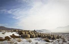 Пастух пасет овец в зимней степи на юго-востоке Казахстана у границы с Китаем 16 февраля 2012. Президент Казахстана Нурсултан Назарбаев заподозрил теракт за гибелью на границе с Китаем пограничников, тела которых были обнаружены на сгоревшем посту в горах. REUTERS/Shamil Zhumatov