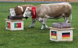 """<p>Yvonne (à droite), ici avec son veau, se prononce pour une victoire portugaise contre l'Allemagne à l'Euro de football en dévorant le contenu d'une mangeoire ornée d'un drapeau lusitanien. La vache bavaroise, candidate à la succession de Paul le Poulpe, """"oracle"""" du Mondial de football sud-africain, a raté ses débuts de pronostiqueuse, à la plus grande joie des supporters de l'équipe d'Allemagne. /Photo prise le 8 juin 2012/REUTERS/Michaela Rehle</p>"""