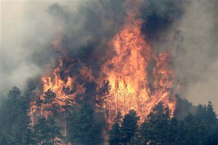 Trees are engulfed in flames in Colorado's High Park Fire, about 15 miles (24 km) northwest of Fort Collins June 11, 2012. The fire was estimated to be at 37,000 acres, according to the county sheriff on Monday. REUTERS/Rick Wilking