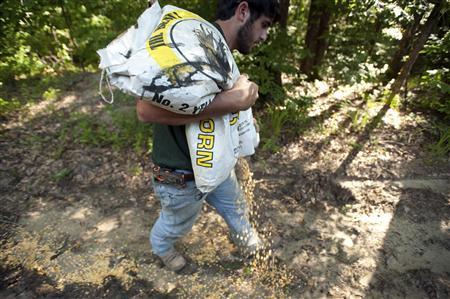 Guide Hunter Pritchett puts out corn for a wild hog hunt at Great Southern Outdoors Wildlife Plantation in Union Springs, Alabama, June 16, 2012. REUTERS/Michael Spooneybarger